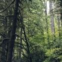 03 Untitled (Brice Creek, Oregon n.1403)