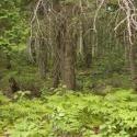 23 Minnesota Trail