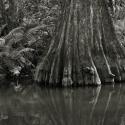 13 Loxahatchee River