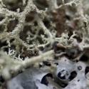 27 Field study 09_23 (lichens)