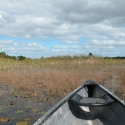 11 Savannas Preserve State Park - St. Lucie Co.