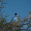 02 Lagoon (osprey feeding)