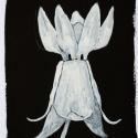 24 Black-White Organic Form 7