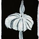 25 Black-White Organic Form 8