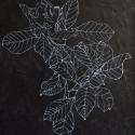 50 Gardenia
