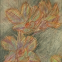 05 Orchid LaVarnn