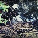 03 Tarpon River _021