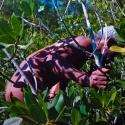 05 Mangrove, Mud, Mystery (series)