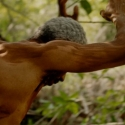 02 Mangrove, Mud, Mystery (series)