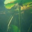 09 underwater-mn01