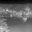 08 Jack Island State Preserve