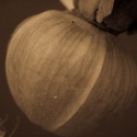19 Untitled (bulb skin)
