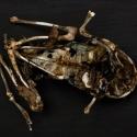 28 frog skeletal form