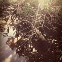 36 Mangroves 027v2