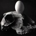01 Skull & Egg