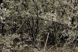 img2005-04-02-007vslider